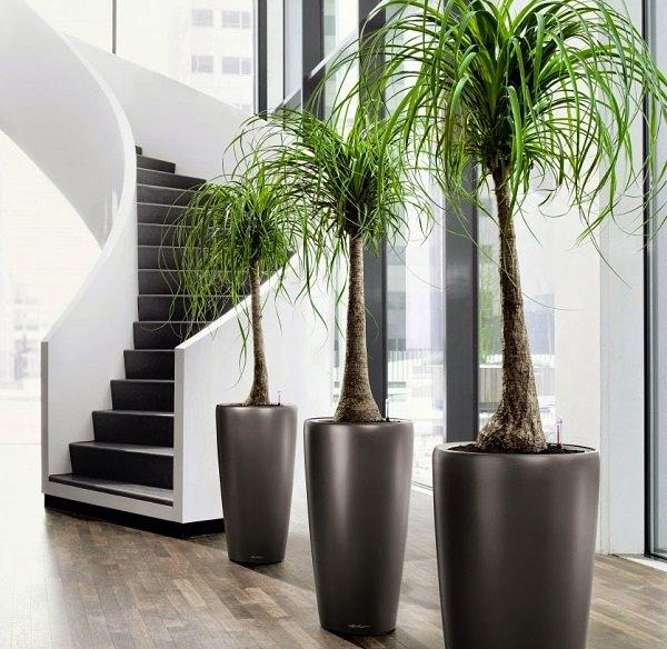 Succulent/ Indoor