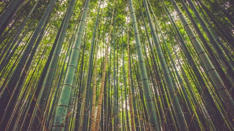 Main-image-3----20151120074527-bamboo-918484-1920