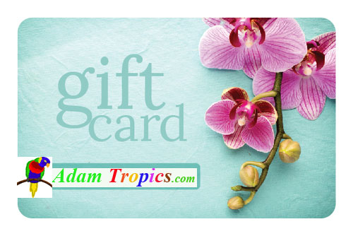 Gift-Card.jpg_product