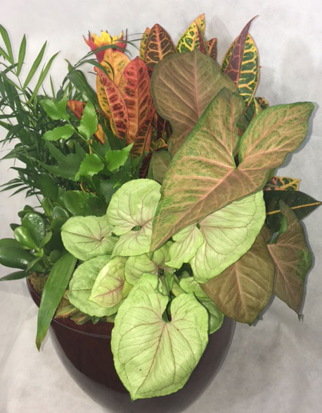 croton 1.jpg_product_product_product_product_product_product
