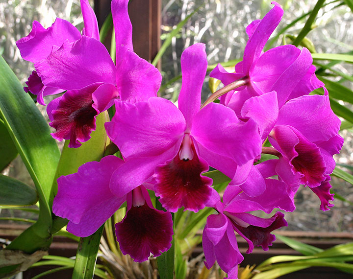 orchids-indoors plants.jpg