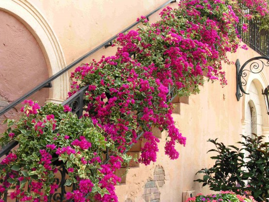 Bougainvillea-Wall-graphic