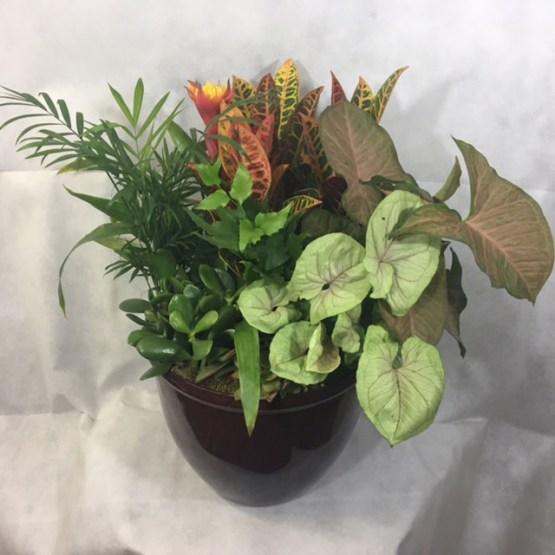 Succulent Indoor Plants Gift Ceramic Planter Large