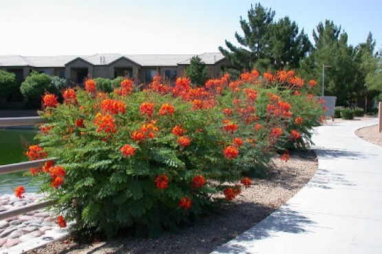 Pride of Barbados 3
