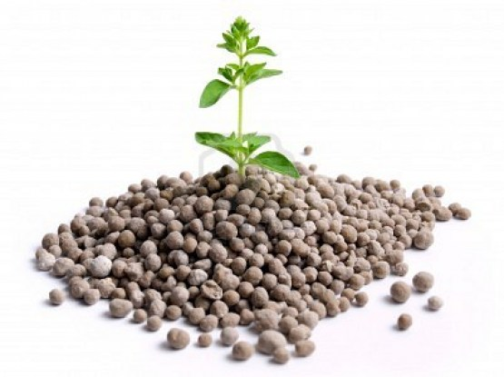 essay on nitrogen fertilizers