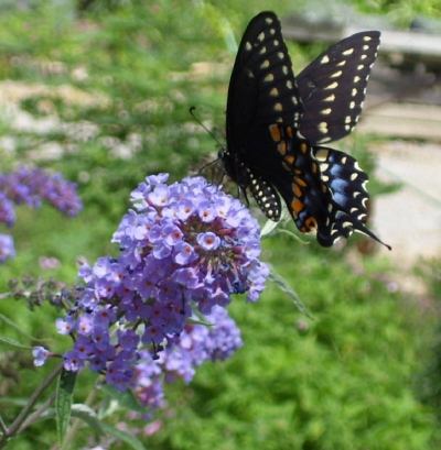 BRING BIRDS AND BUTTERFLIES TO YOUR GARDEN